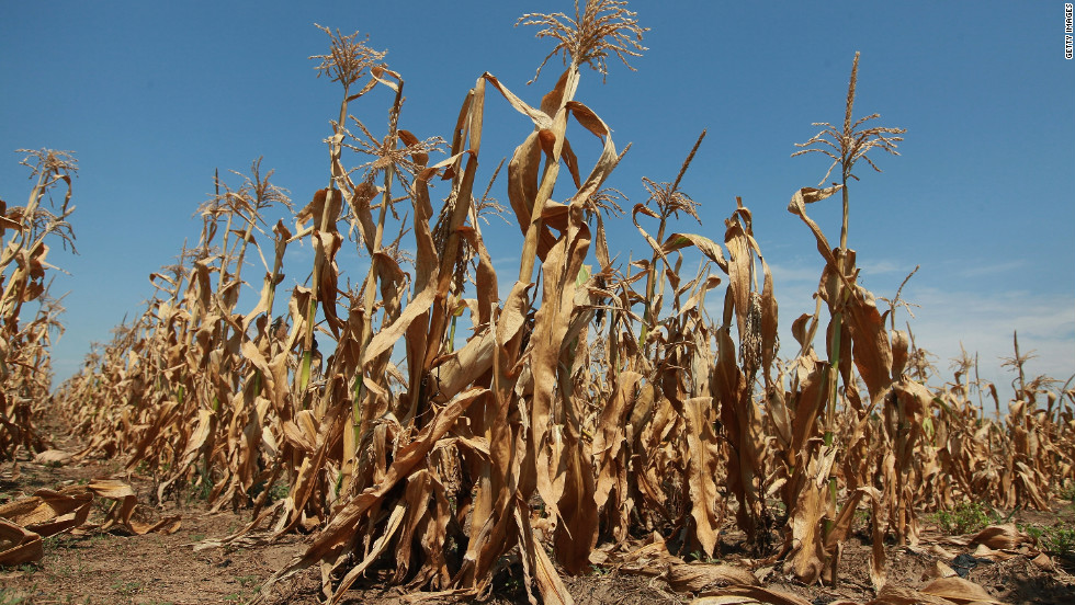 Extreme temperatures keep affecting wheat production in Europe